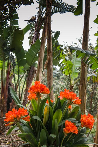 Botanical Park & Gardens of Crete- Flora and Fauna