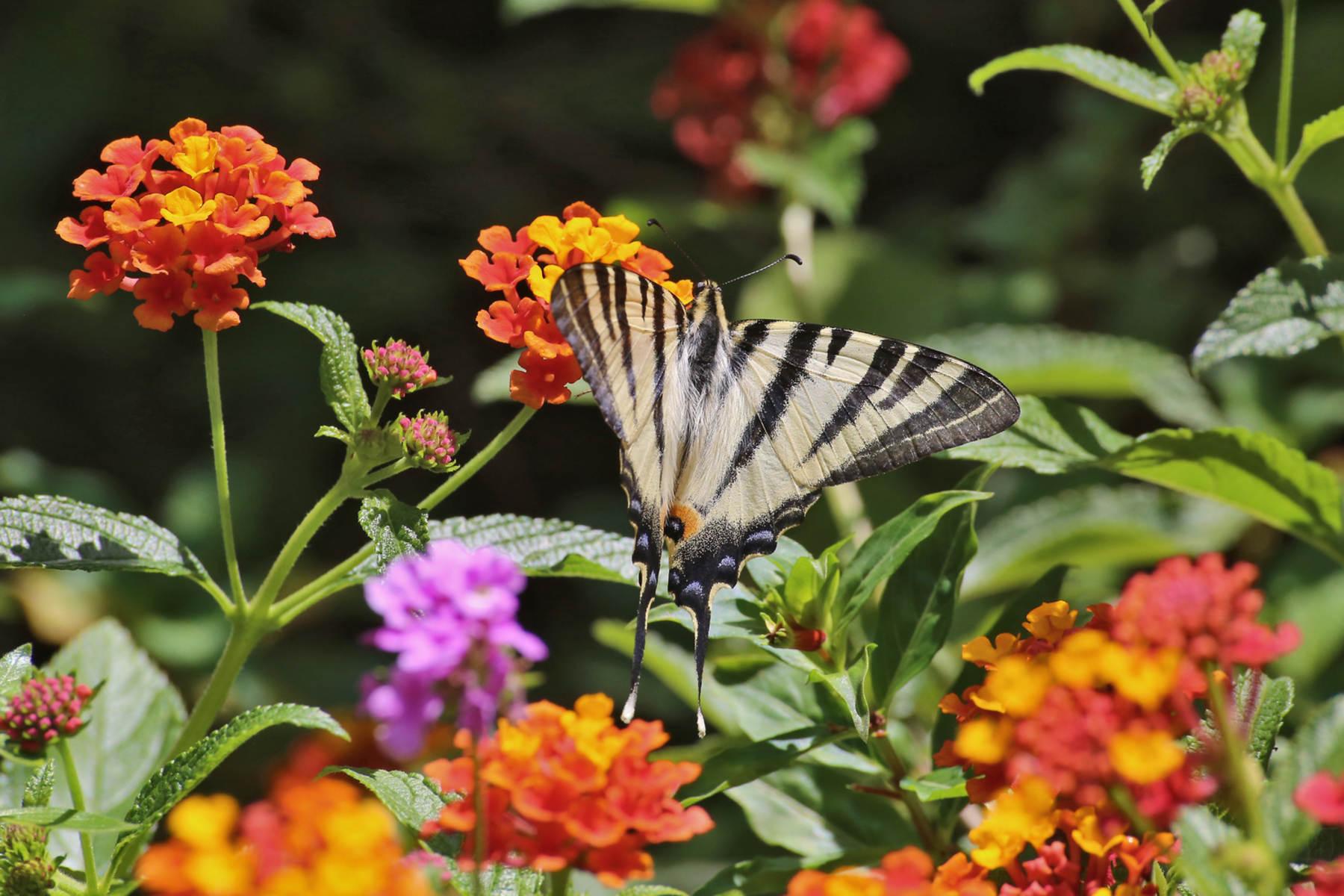 botanical park & gardens of Crete- restaurant- Omalos Plateau